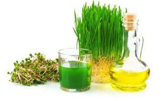 Масло зародышей пшеницы для лечения патологий и не только: 7 способов применения