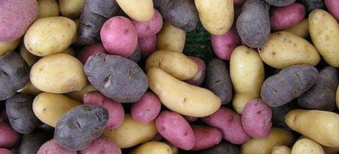 Картофель польза и вред. Полезна ли картошка?