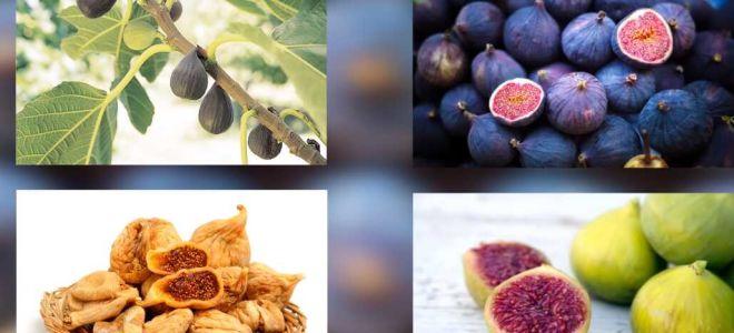 Инжир, польза и вред. Как выбрать и как есть
