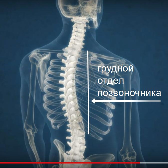 остеохондроз лечение грудного отдела позвоночника
